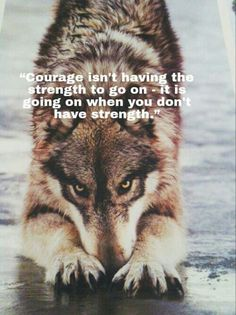 Home - Save gray wolf - 🌋Wolf Quotes?🐺Check out get awesome designs & products to express your LOVE to - Meaningful Quotes, Inspirational Quotes, Motivational Quotes, Strong Quotes, Positive Quotes, Wisdom Quotes, True Quotes, Funny Quotes, Lone Wolf Quotes