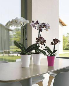 Maceta Clivo orquídea (plástico inyección) - Clivo orchidea pot (polypropylene)  Medidas - Size  Ø 105 (cm.105 x 125 h.) lt 065  Ø 125 (cm.125 x 15 h.) lt 11  Para obtener más información pueden ponerse en contacto con nosotros en el teléfono 942 577 381 donde podemos atenderles de Lunes a Viernes de 9:00-13:00 y 15:00-19:00 en el email info@terrafloraplus.com o contactando con uno de nuestros comerciales.  To get more information you can contact us sending an email to…