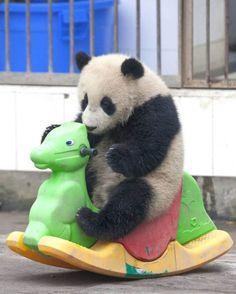 Urso Panda montando seu cavalo - Hipismo & Co