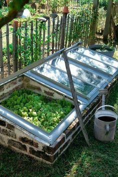 Greenhouse ideas!