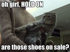 I wish I had a gay talking cat to shop with :(