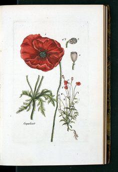 Botanic art at vintageprintable