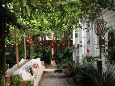 We have two fast-growing, seasonal vines in the garden of our tiny house: grapevines, and trumpet vines. Small Courtyard Gardens, Small Courtyards, Back Gardens, Small Gardens, Garden Canopy, Garden Sofa, Garden Seating, Tree Canopy, Side Garden