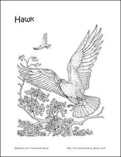 Looking for Birds Printables? Find Coloring Pages, Games