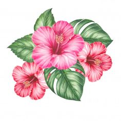 Botanical Flowers, Hibiscus Flowers, Tropical Flowers, Colorful Flowers, Flower Svg, Flower Clipart, Tropical Flower Tattoos, Hawaii Tattoos, Tiki Hawaii