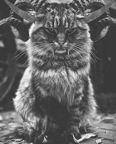 Oooooo, I would cuddle the HELL out of this Baphocat!  Cat's METAL!!