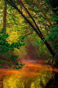 """coiour-my-world: """"Sunbeam Stream """" Beautiful World, Beautiful Places, Beautiful Pictures, Beautiful Scenery, Mother Earth, Mother Nature, Amazing Photography, Nature Photography, Cosmos"""