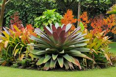 Get suggestions for enjoying an attractive Florida Gardening, field, or yard. Our specialists inform you all you need to florida gardening flowers Florida Landscaping, Florida Gardening, Tropical Landscaping, Front Yard Landscaping, Tropical Garden Design, Tropical Backyard, Tropical Plants, Tropical Gardens, Succulent Landscaping