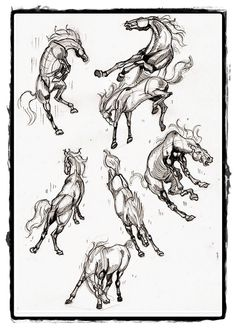 25 belos desenhos de animais para a sua inspiração 6