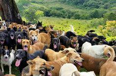 """Manuel Travisany, diretor de Criação, definiu o conceito-chave de cães vira lata: cães SRD são, na verdade, a união das qualidades de duas ou mais raças e, desta forma, eles pertencem a uma raça muito especial: são os cães únicos (""""unique breeds"""", ou raças exclusivas). O envolvimento do diretor foi tão grande que a agência decidiu liberá-lo para que ele pudesse cuidar apenas da divulgação do abrigo."""