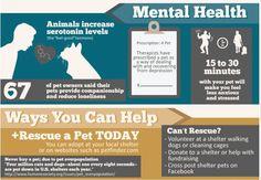 Pet Adoption Infographics - Google Search