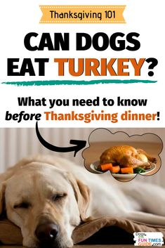 Can dogs eat turkey?... What about other Thanksgiving fixins? Here are the best and worst foods for dogs on Thanksgiving. (Also, see the #1 reason dogs end up at the vet around the holidays - and it's 100% preventable!) How to be a good pet parent this Thanksgiving. | dog thanksgiving dinner | dog thanksgiving treats