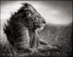 king of creatures