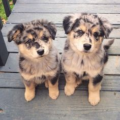 Cutest dogs I've ever seen.