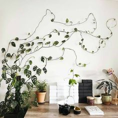 Monstera obliqua inspiring resilience via Green Plants, Potted Plants, Indoor Plants, Indoor Climbing Plants, Monstera Obliqua, Creepers Plants, All About Plants, Deco Nature, Decoration Plante