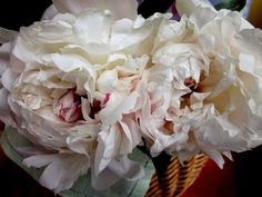 Widow's Endorphins: The Divine Peonies of Thomas Darnell