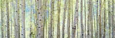 Aspen Photographic Print by Shelley Lake at AllPosters.com