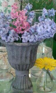 Copa vintage de jacintos