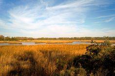 """I walked into the room dripping in gold.""  #chesapeake #virginia #va #757 #greatbridge  #latergram #marsh #watertower #nature #love by onecentwonder"