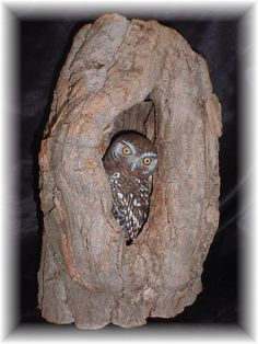 Wood carved owl in natural burrow