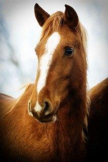 Mustang w/ winter coat... ahhh Love.