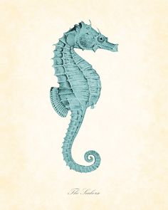 Drawing Detail. Vintage seahorse print. Illustration. Seahorse. Turquoise. www.origin-of-style.com