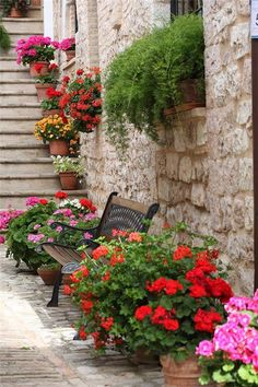 Flowers of Spello, Perugia, Italy, Umbria. Being able to travel to beautiful places someday. Beautiful World, Beautiful Gardens, Beautiful Flowers, Beautiful Places, Simply Beautiful, Container Plants, Container Gardening, Organic Gardening, Gardening Tips