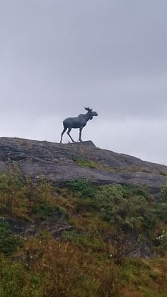 The moose sculpture nearby Sandnessjøen, Helgeland, Norway