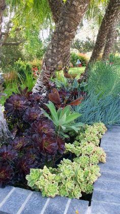 How To Use Succulent Landscape Design For Your Home Succulent Landscaping, Succulent Gardening, Front Yard Landscaping, Planting Succulents, Planting Flowers, Landscaping Borders, Drought Resistant Plants, Drought Tolerant Landscape, Indoor Outdoor