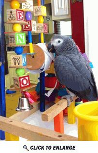 Great news!! After a careful, and very thorough risk analysis, Scuttlebutt has deemed the Willow Tree Play gym a worthy (and preferred) replacement to the top of his cage.  He really likes the paper roll