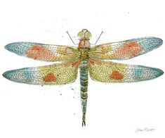 Dragonfly Bliss-jp3441 Painting by Jean Plout