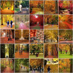walking into autumn