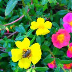 ハチのムサシにならないように!d(^_^o)