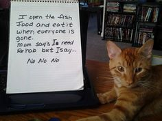 An epic gallery of cat shaming pictures that prove these cats are the naughtiest in the world. A hilarious cat shaming picture gallery. Funny Cats And Dogs, Bad Cats, Crazy Cats, Cats And Kittens, Funny Animals, Animal Funnies, Animal Memes, Bad Kitty, Funny Kitties