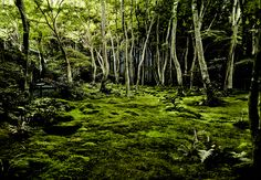Andrew Goldie moss-forestBiger-(1)
