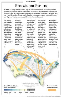 The Mind-Boggling Math of Migratory Beekeeping 31 billion honeybees plus acres of almond trees equals 700 billion almonds—and one. Scientific American Magazine, Honey Bee Hives, Honey Bees, Bee Friendly Plants, Wild Bees, Community Supported Agriculture, Buzz Bee, Bee House, Information Graphics