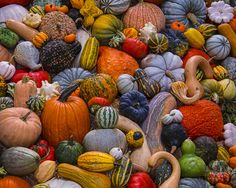 Autumn Harvest Jigsaw Puzzle | 1000 Piece Puzzles | Vermont Christmas Co. VT Holiday Gift Shop