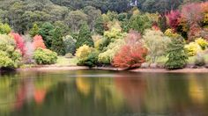 https://flic.kr/p/Ffabnx | Mt Lofty Lake in Autumn