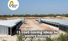 15 cost-saving ideas for poultry housing Chicken Facts, Broiler Chicken, Poultry Equipment, Poultry Farming, Poultry House, Water Management, Cost Saving, Home Design Plans, Saving Ideas