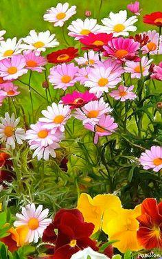 Fleurs gif