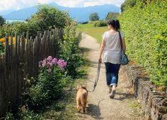 von BETTINA KÜSTER In Deutschland gibt es Reha-Kliniken in denen die Mitnahme von Hunden erlaubt ist. Gut zu wissen, vor allem für Menschen, die alleine sind und sich bei Krankheit erst recht nicht…
