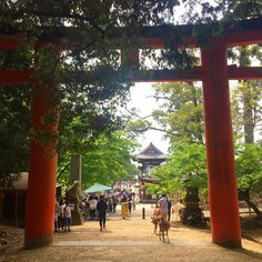 "474 Likes, 1 Comments - Dexter Saint デクスター・セイント (@dextersaint) on Instagram: ""#torii #toriigate #nara #japan #Nippon #instadaily #instalike #instajapan @natgeo #travel #tree…"""