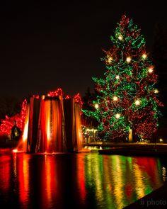Christmas in Denver, Colorado ~ Blossoms of Light at Denver Botanic Garden Christmas Lights, Christmas Time, Merry Christmas, Xmas, Living In Colorado, Denver Colorado, Colorado Springs, Denver Activities, Denver Botanic Gardens