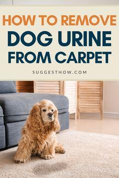 Dog Pee Smell, Dog Smells, Urine Smells, Cleaning Pet Urine, Pet Odors, Cleaning Tips, Dog Urine Remover, Odor Remover, Urine Cleaner