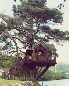 Tree house over the lake