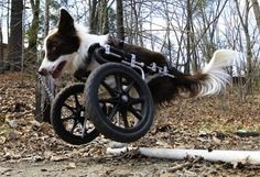 Awesome dog who survived euth recommendation, happy every day #dog #survivor #story