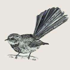 Fantail Art Print by Olivia Bezett NZ Art Prints, Art Framing Design Prints, Posters & NZ Design Gifts Maria Tattoo, New Zealand Art, Nz Art, Pet Rabbit, Bird Art, Tattoo Designs, Tattoo Ideas, Colored Pencils, Surrealism