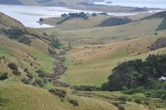 Touring Dunedin and Talaroa Head in the South Island of New Zealand