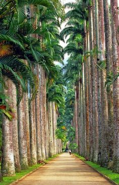 Rio de Janeiro Botanical Garden, Brazil.  A preparar-me para as férias!!!! QUER GANHAR DINHEIRO COM INTERNET? http://www.bolosdatialuisa.com/eu