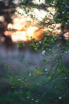 Language of Pictures Aesthetic Photography Nature, Landscape Photography, Nature Photography, Frühling Wallpaper, Nature Wallpaper, Blur Photo Background, Background Images, Nature Pictures, Beautiful Pictures